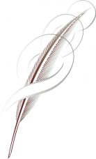 Illustrazione - penna d'oca