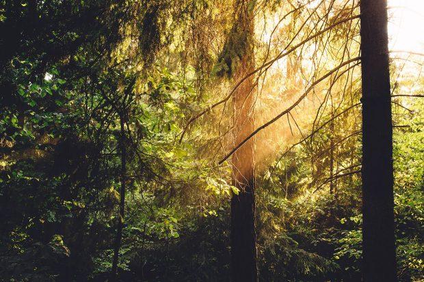 Il Bosco Bello - alberi