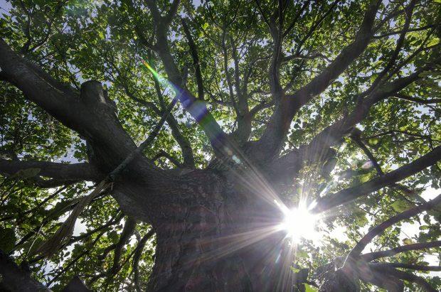 Il Bosco Bello - albero